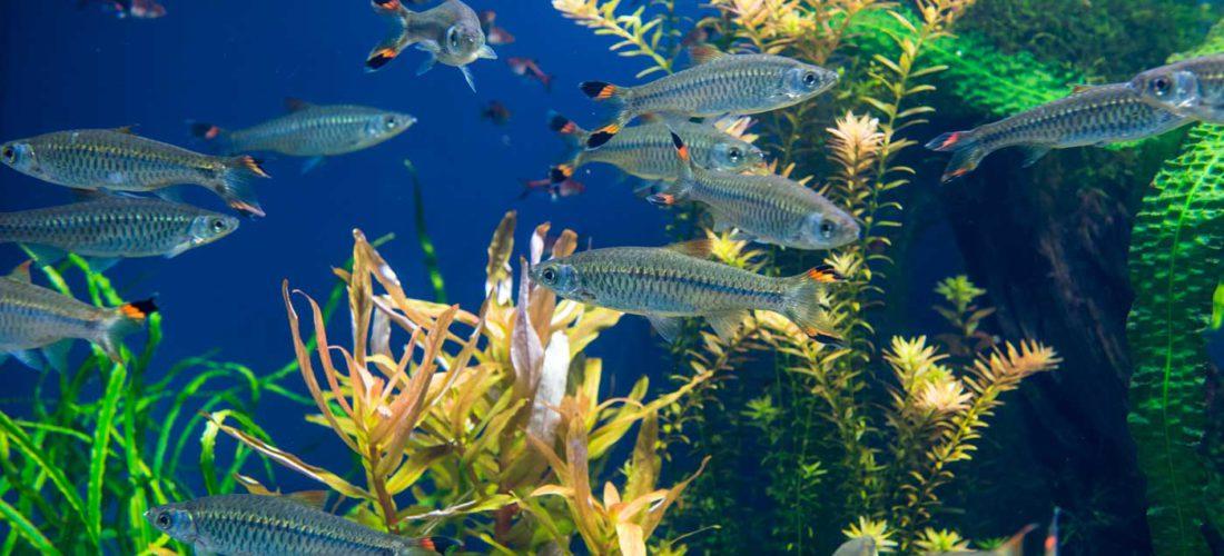 First Grade Field Trip to Norwalk Aquarium